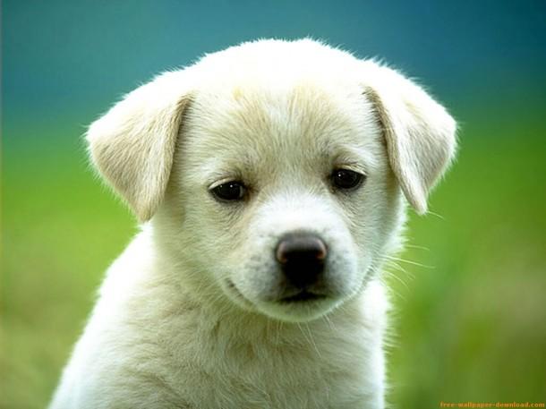 cachorro-610x457
