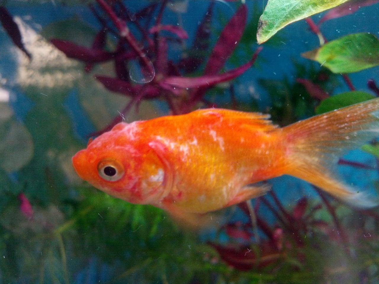 tratamiento para hongos en peces animales hoy