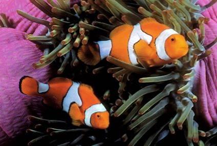 Ser-dueño-de-peces-tropicales-Una-nueva-aventura