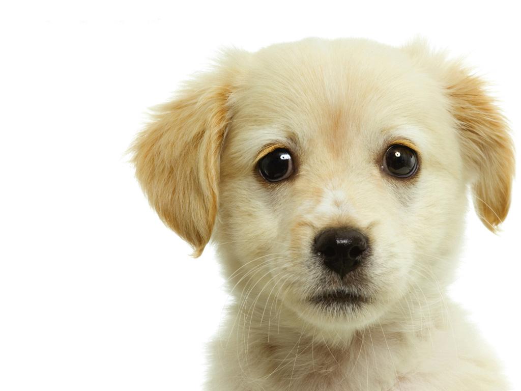 cachorros2B449FE9