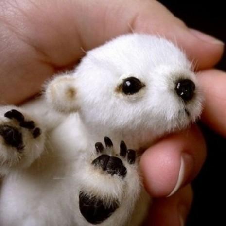 mascotas bebesosito polar