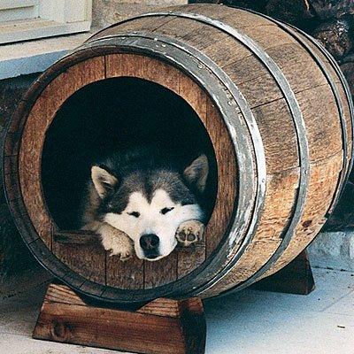 mascotas cucha con barril11802_10150856764247825_544030487_n
