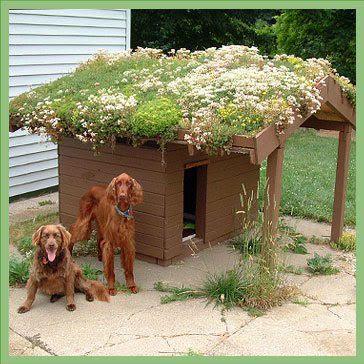mascotas cuchas con techos verdes563863_10150658195842825_1919186072_n