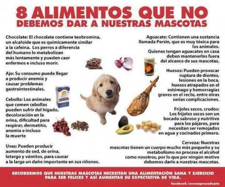 Para tus mascotas lo mejor comida casera consejos en alimentaci n de mascotas animales hoy - Comida para cachorros de un mes ...