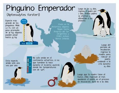 Image gallery informacion del los pinguinos for Informacion sobre los arquitectos