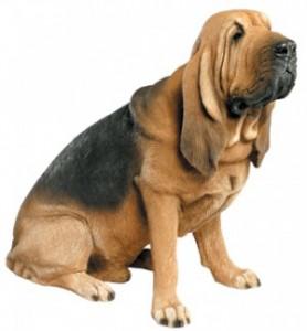 bloodhound-e1289507593371
