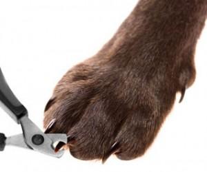 como-cortar-unas-perro-cortaunas