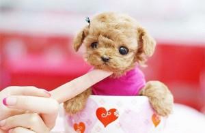 mini-perro