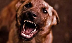 perro-agresivo (1)