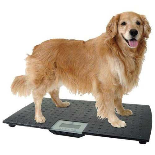 Pet Scales For Small Dogs