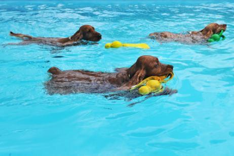 Cómo enseñar a nadar a tu perro