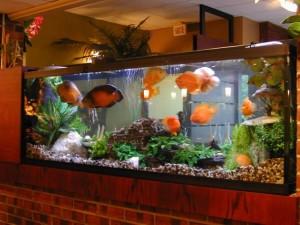 acuario-fotografia-enorme