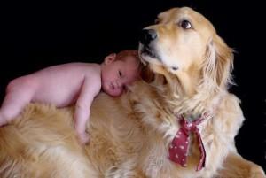 bebe y perros