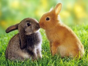 conejos-para