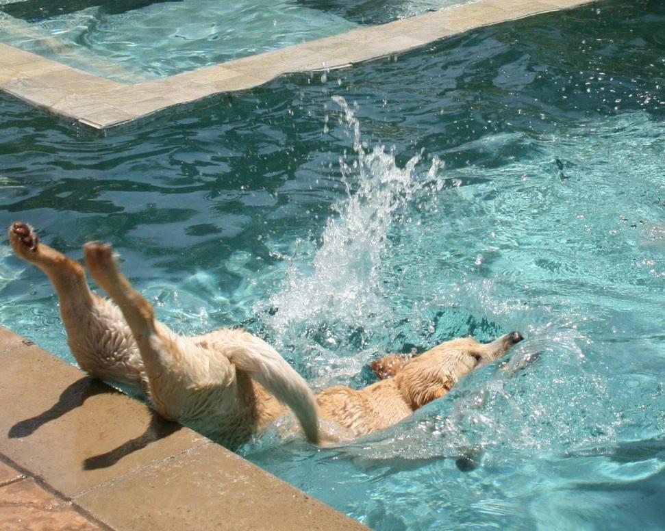 los-perros-no-saben-tirarse-al-agua-de-cabeza