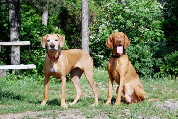 pareja-perrosnuestra4
