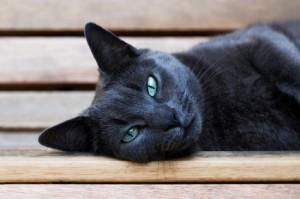 Consejos-para-tratar-la-depresión-en-los-gatos-depresión-felina-300x199