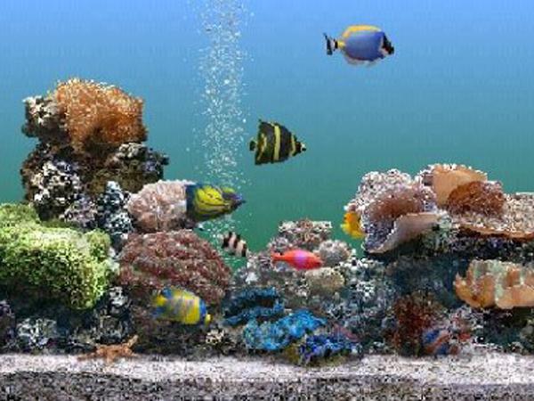 C mo mantener bien el agua de las peceras consejos for Peceras con peces