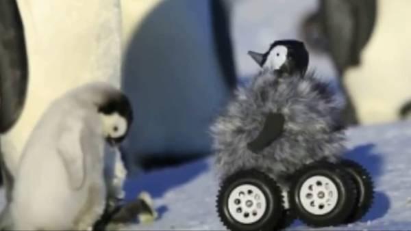 Robot-pinguino-investigar-comportamiento-Antartida_CLAVID20141104_0009_34