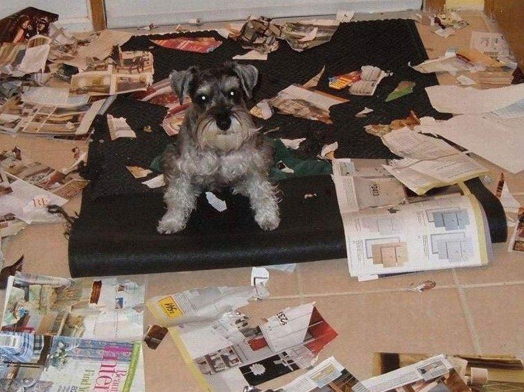 ansiedad-por-separacion-en-perros