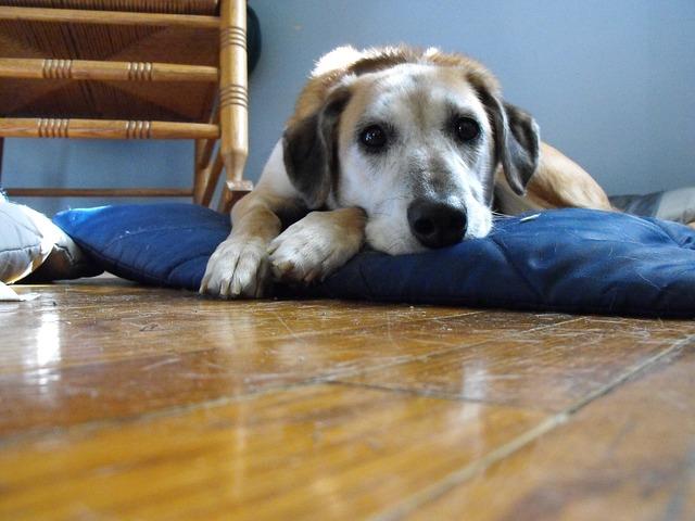 ansiedad-por-separacion-perros