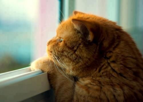 depresion-en-gatos