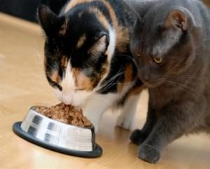 dieta-para-gatos1