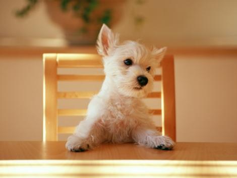 perro-esperando-comida