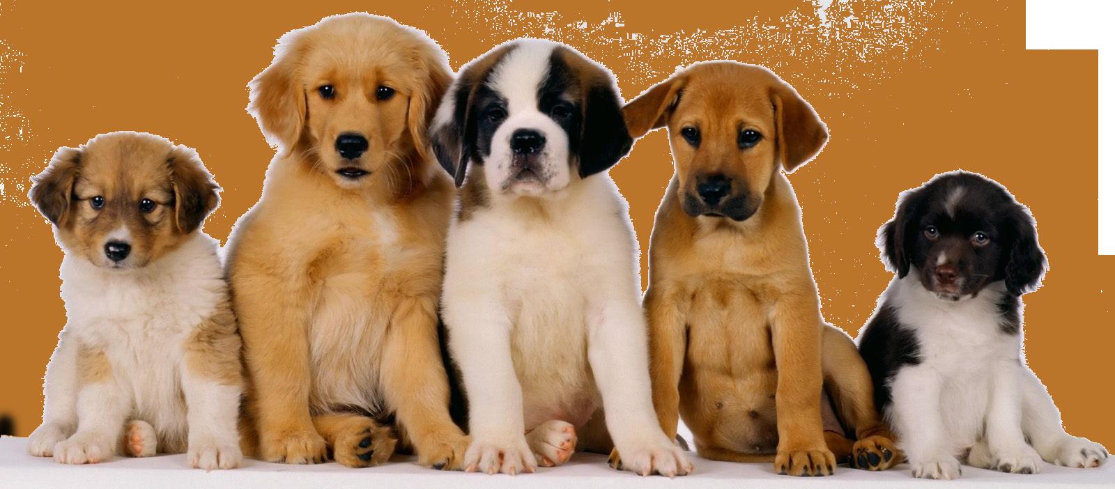perroscachorros-de-perro