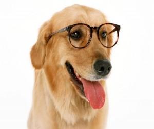 vision-perro