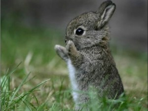 Conejo-en-dos-patas
