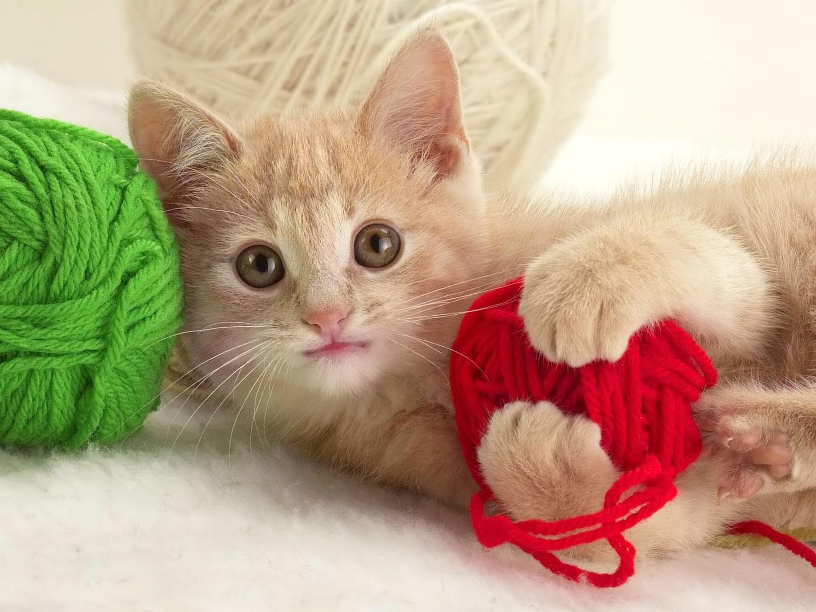 Cuales son los juegos mas peligrosos para los gatos - Fundas para unas de gato ...