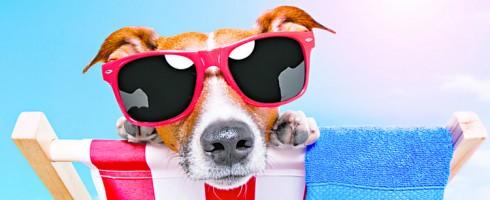 Mascotas-en-el-Verano_t750x550-490x200