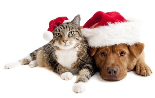anim500x315xperro-gato-navidad-regalo-animales.jpg.pagespeed.ic.sM0fvvX1P1