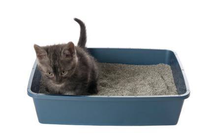 gatos con incontinencia_3537