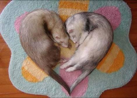masanimales-amor