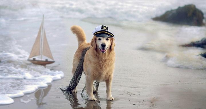 mascotasconsejos-perro-playa