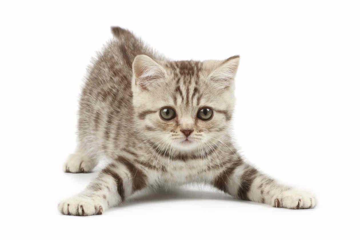 Vecinos molestos por ladronas de gatos en barrios bajos