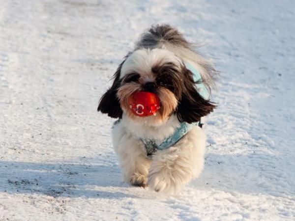 Consejos a cerca de ejercicios de invierno prácticos para que ...