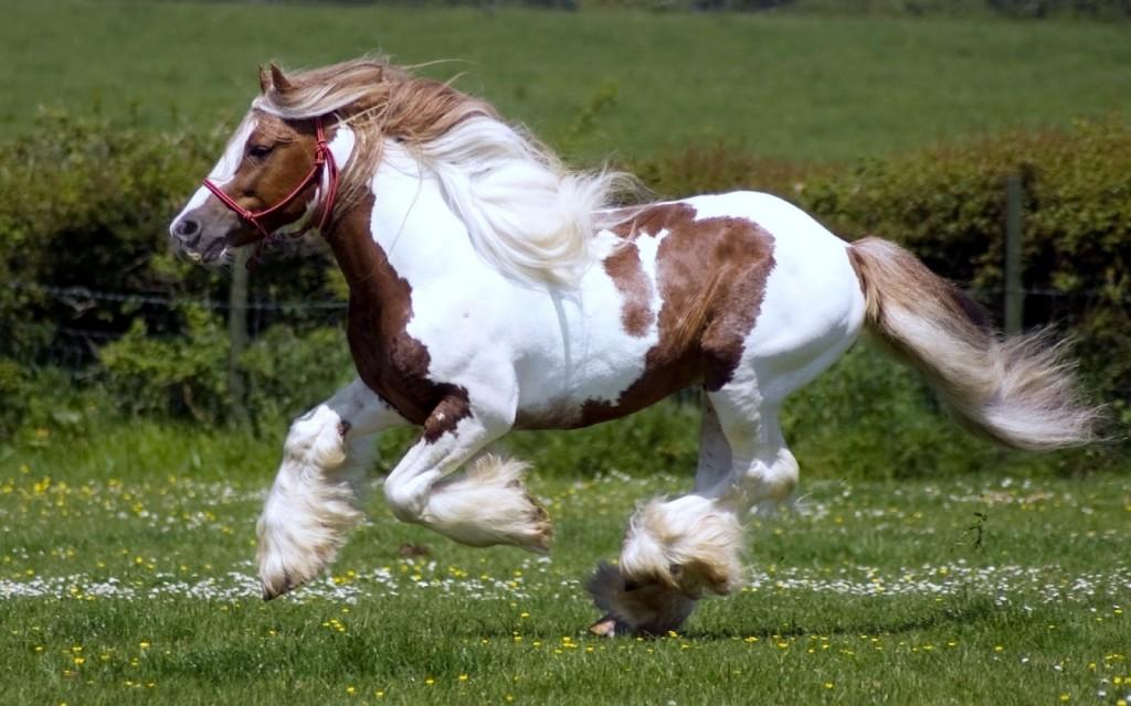 caballos-corriendo_imagenes-de-animales_01