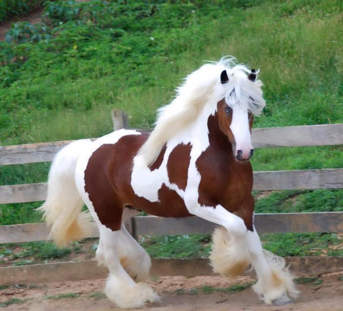 caballos21683_352402238190066_1095005736_n