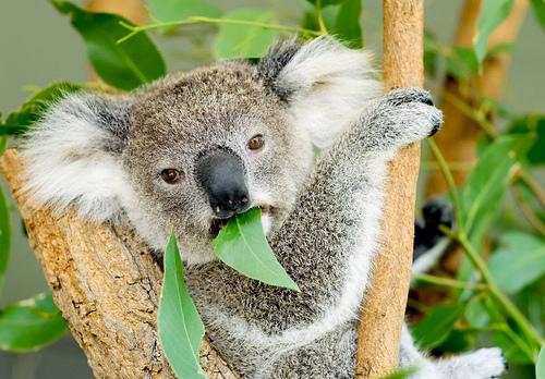 2007-01 - Australia