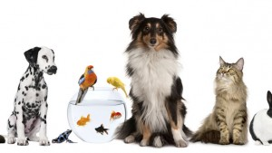 mascotas-animales-getty_MUJIMA20120827_0015_53