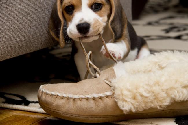 peluchesmordiendo-zapato2