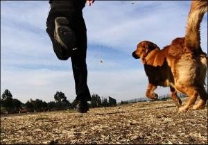 perro-anselmo-corriendo-la-cola-de-mi-perro2