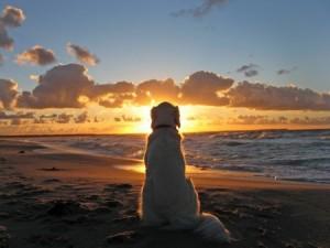 perro_playa2