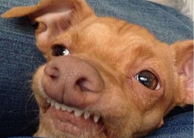 Imágenes de los perros más feos del mundo | Animales Hoy