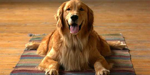 accesorios-mascotas-perros