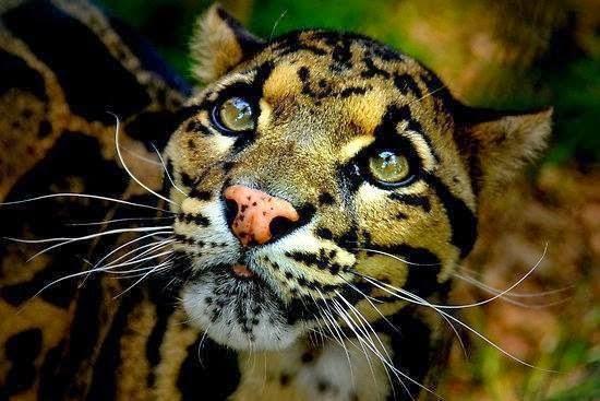leopardoblogger-image--314632290
