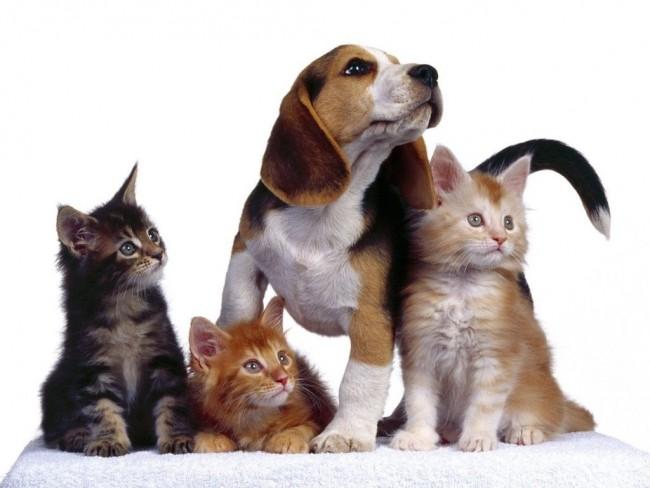 mascotas2